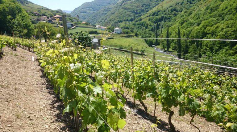 Viticultura heróica