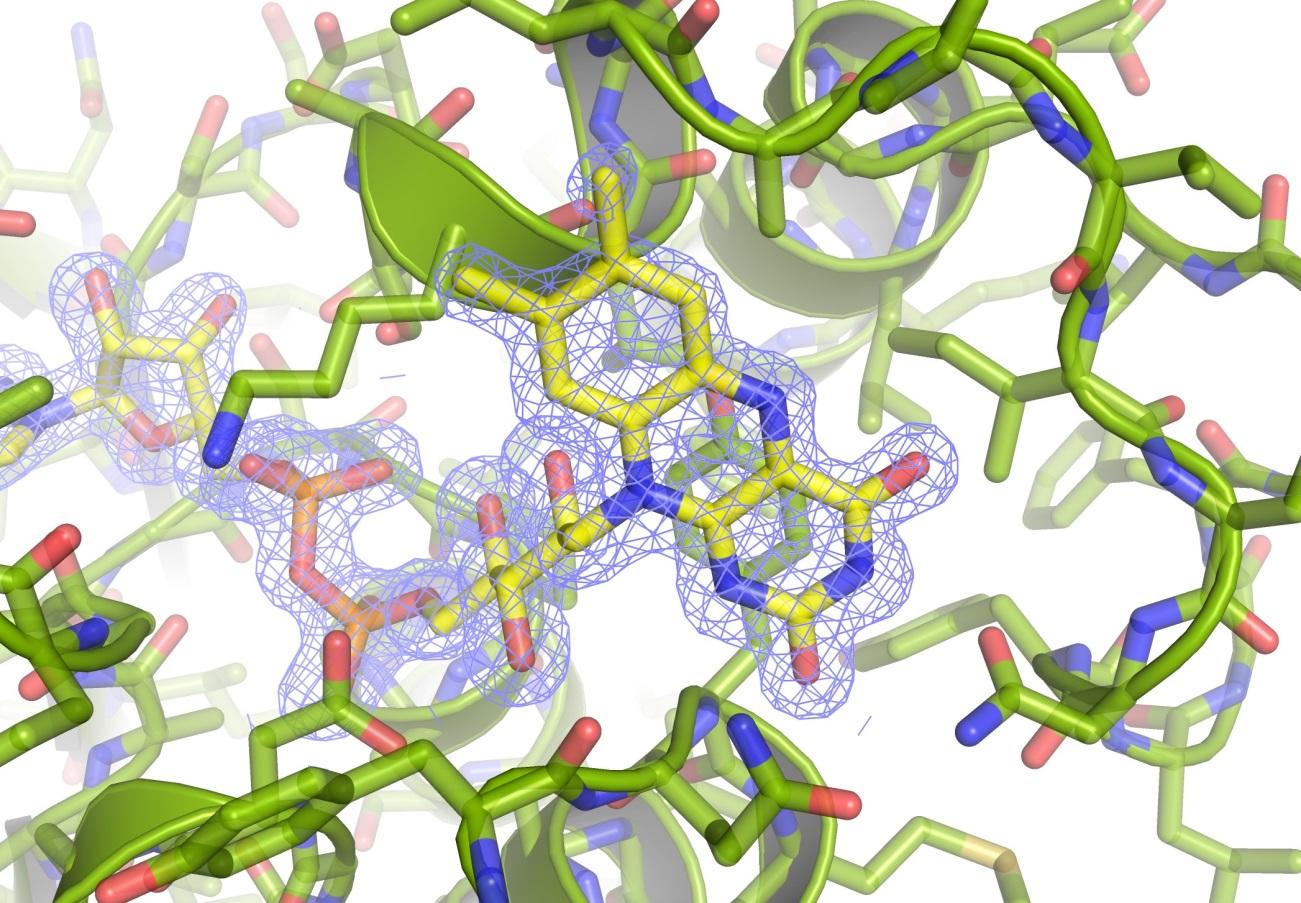 'Fotografía' atómica de la nueva proteína