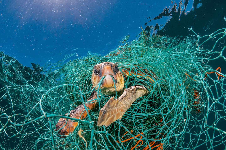 Tortuga atrapada en redes