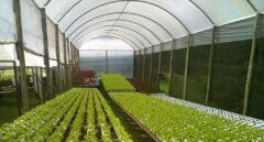 Cultivar sin tierra para alimentar al mundo