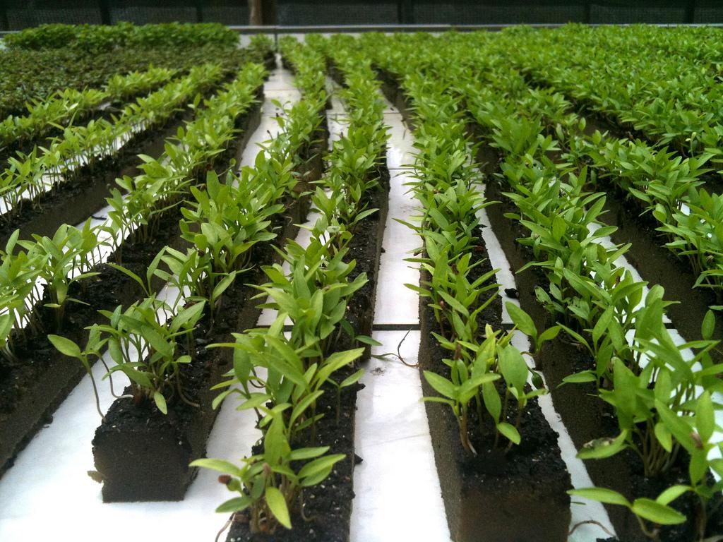 Los cultivos de hortalizas como la lechuga, el tomate, el pimiento y el pepino dan buenos resultados con la aplicación de este sistema.