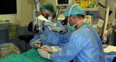 España sigue siendo el país más solidarios en trasplantes y donaciones de órganos.