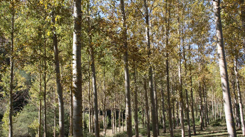En España hay 18 millones de hectáreas de bosque, según el INE.