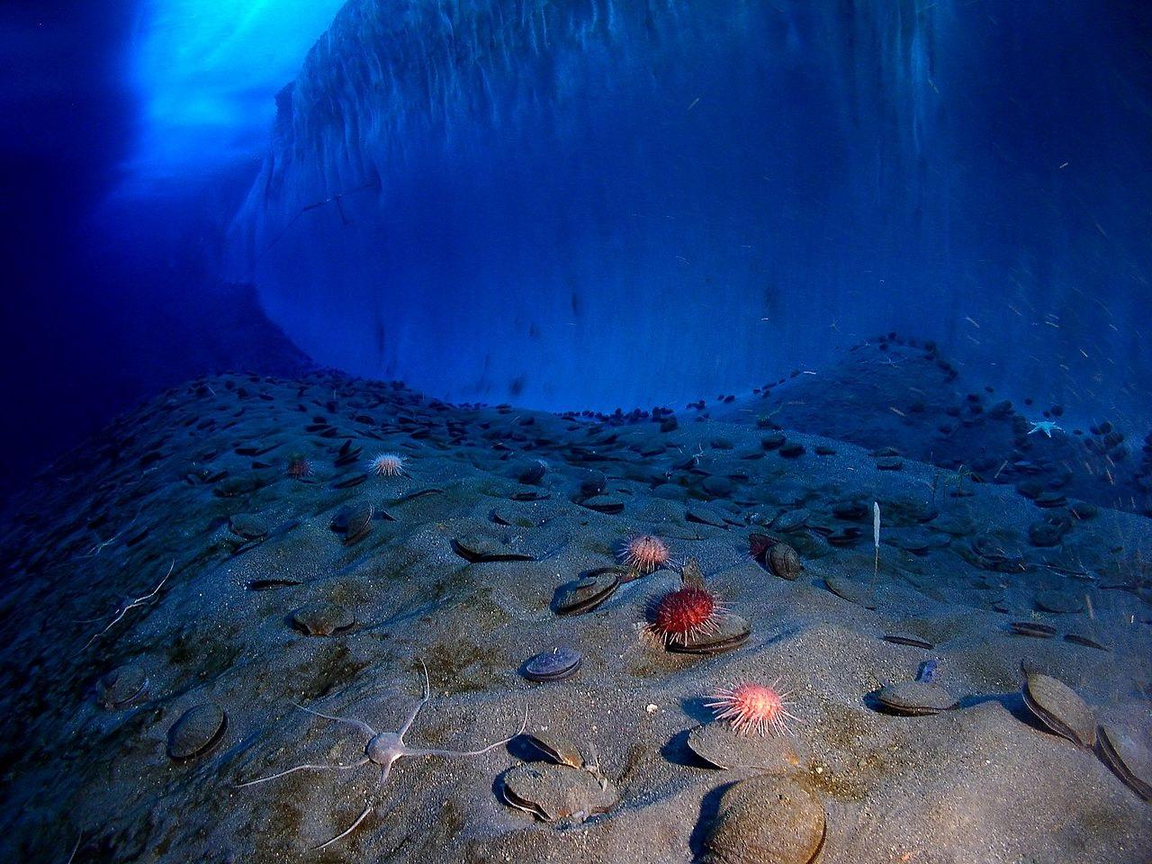 Fondo marino en el Océano Antártico.