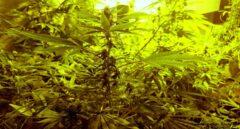 La marihuana engancha a los mercados.