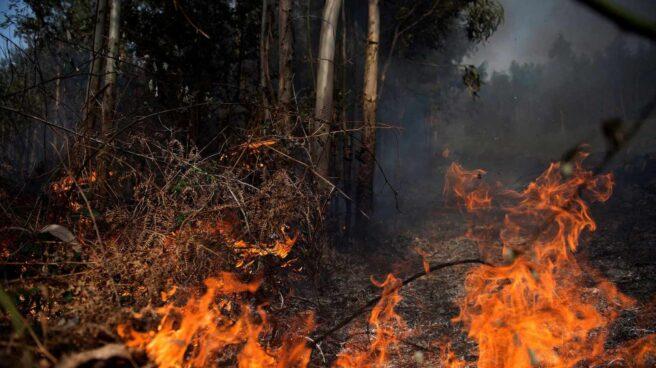Llamas de un incendio en los montes próximos a la localidad cántabra de Ramales de la Victoria.