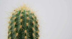 Cómo recolectar agua en el desierto... con escarabajos y cactus