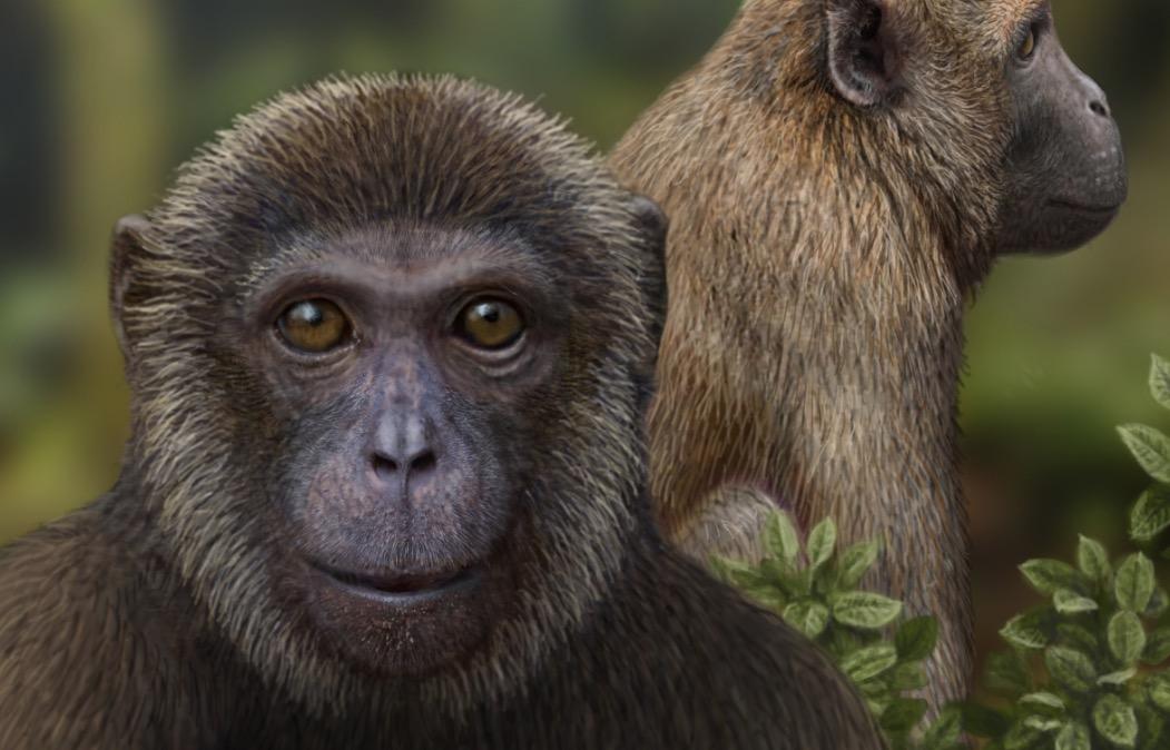 Rukwapithecus y Nsungwepithecus