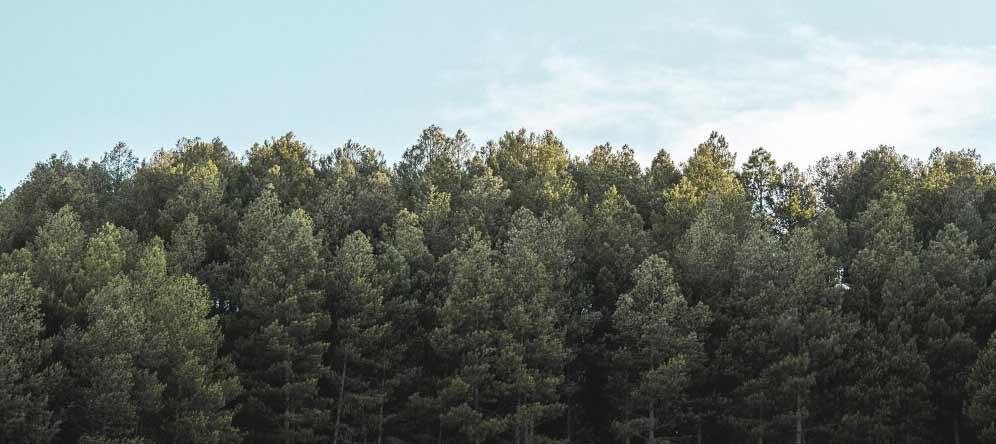 El control sobre los árboles de la replantación debe de ser constante y alargarse dos décadas.