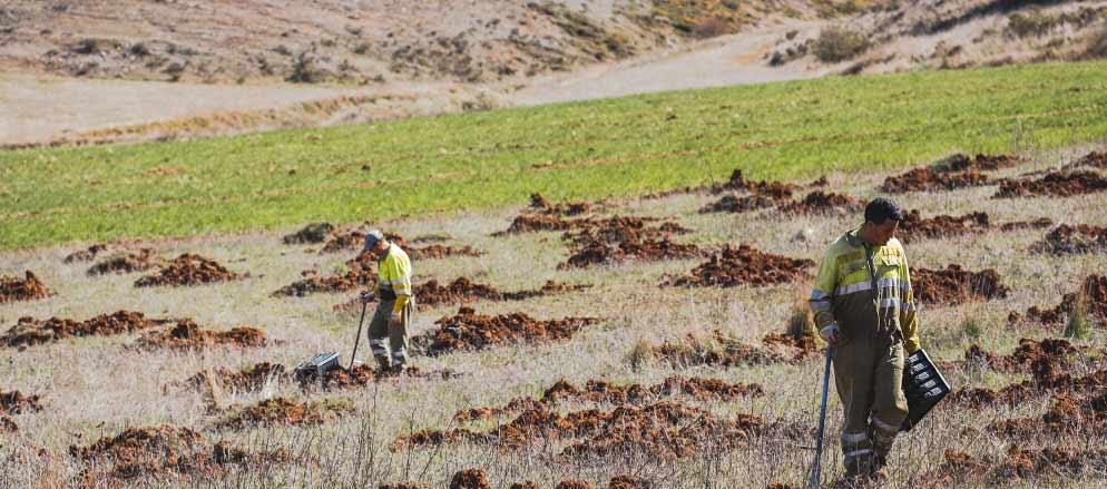 Una replantación en los Picos de Europa.