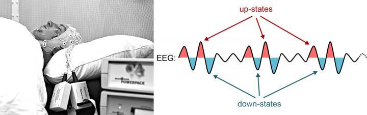 Encefalografía para medir los estados de las células durante el sueño
