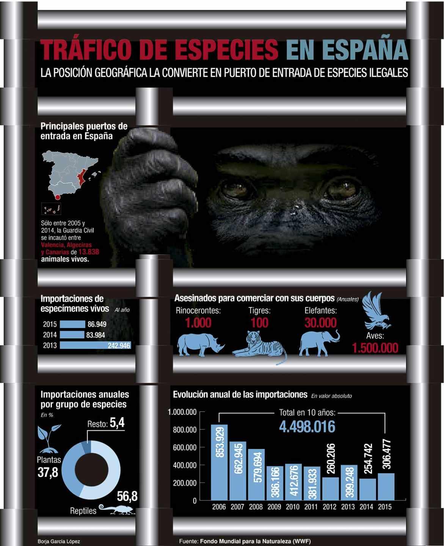 Plantas y reptiles acaparan el tráfico de especies en España.