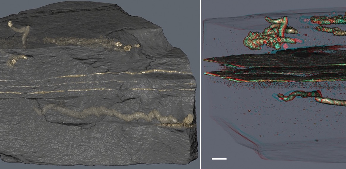Primeros fósiles de seres capaces de moverse
