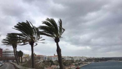 Muere una mujer en Mallorca tras caerle una palmera por las rachas de viento