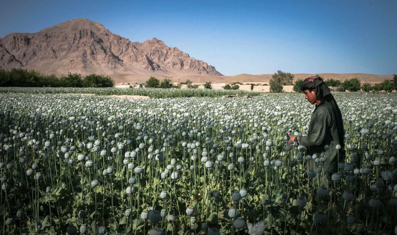 Afganistán, el jardín del opio