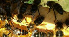 ¿Cómo sería un planeta sin abejas?