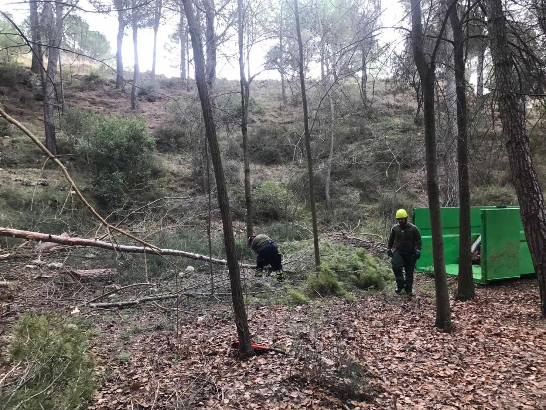 Un trabajo de limpieza de masa forestal.