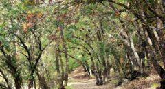 España cuenta con una superficie forestal de 27,7 millones de hectáreas.