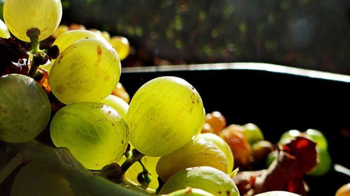 España produce más de 40 millones de hectolitros de vino al año.