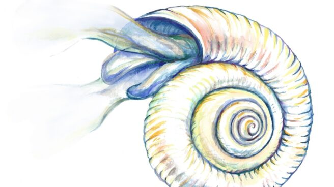 Pterópodo del Océano Antártico