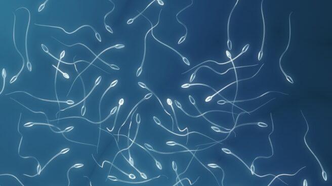 Los seminogramas permiten evaluar de forma sencilla la calidad del esperma