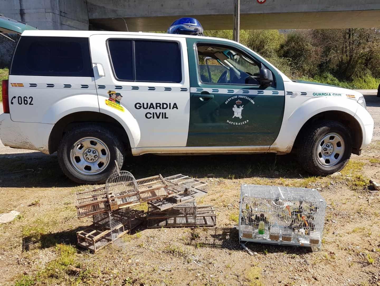 Localizan 28 caballos desnutridos y abandonados en una explotación ganadera en Sevilla