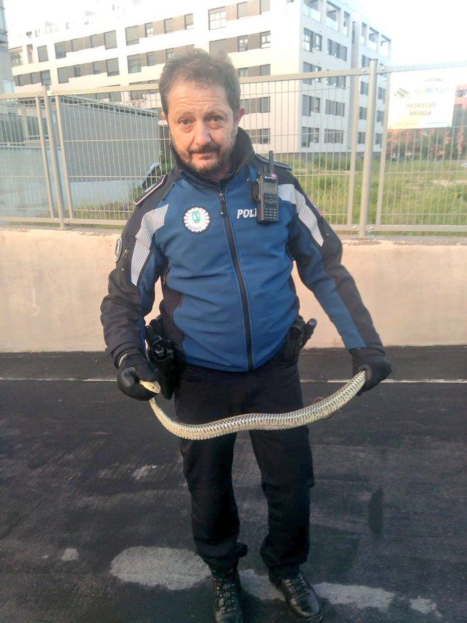 Un agente de la Policía Municipal de Madrid con la serpiente.
