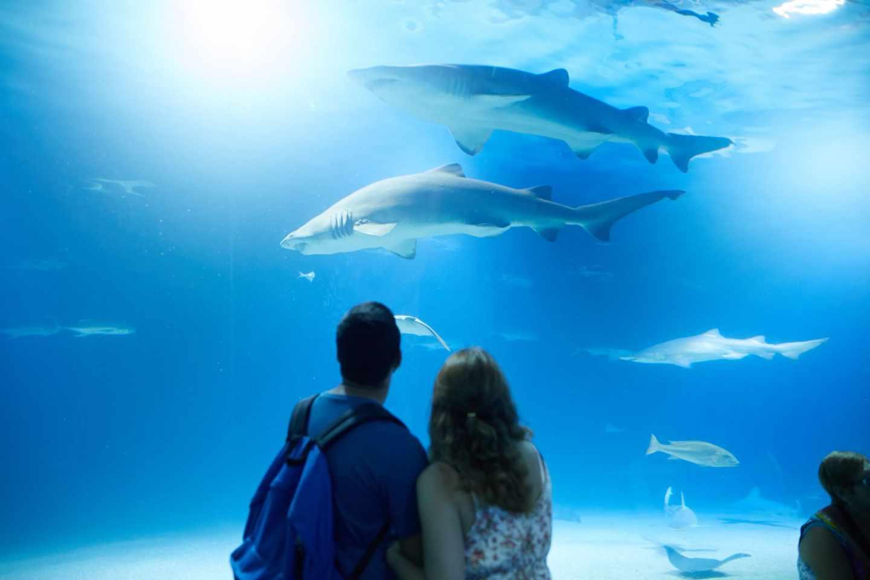 Dos personas contemplan tiburones en el Oceanogràfic de Valencia