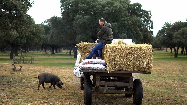 Morante y Abascal en el campo