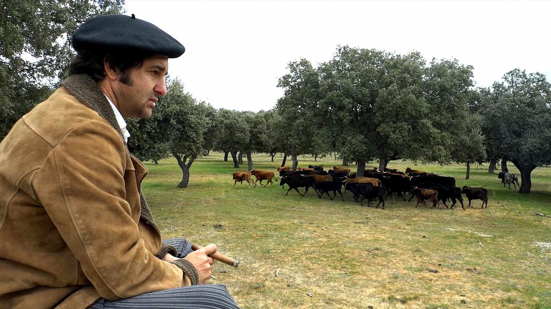 Morante de La Puebla fuma un puro mientras las vacas se alejan