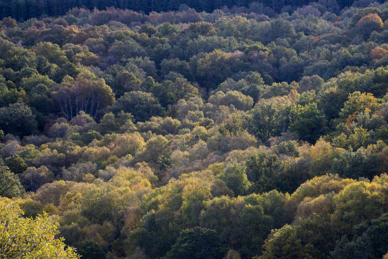 La Dehesa de Somosierra luce en otoño sus mejores galas, ataviada de un sinfín de tonalidades doradas.