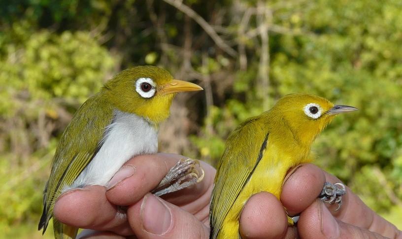 Wakatobi y wanki wanki, nuevas especies descubiertas
