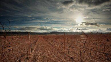 El misterio de Vega Sicilia, el vino con más glamour de España