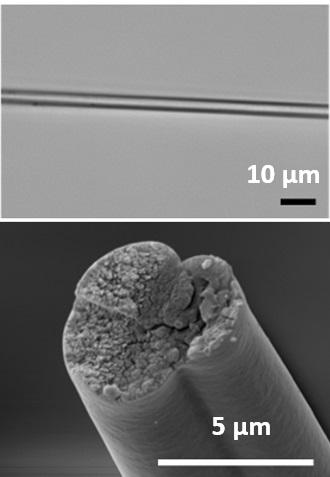 Tela de araña producida con genes de bacterias