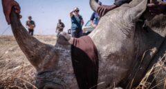 Cazadores de rinocerontes, una batalla por la supervivencia
