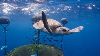 Intervienen más de 600 reptiles vivos, entre ellos tortugas amenazadas