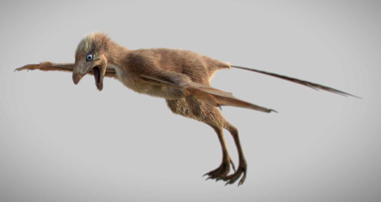 Dino 'murciélago' Ambopteryx longibrachium