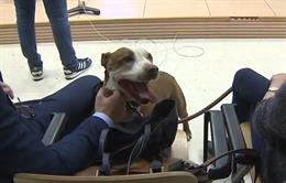 La perra Milagros durante el juicio