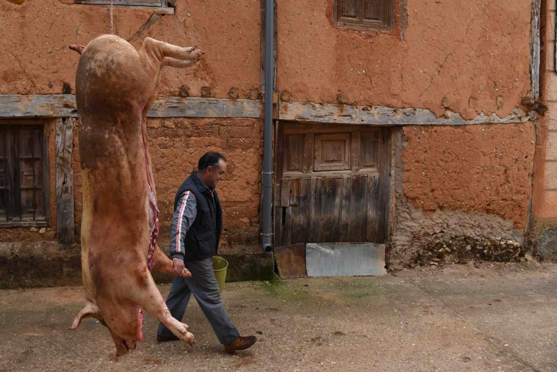 Un cerdo durante una matanza.