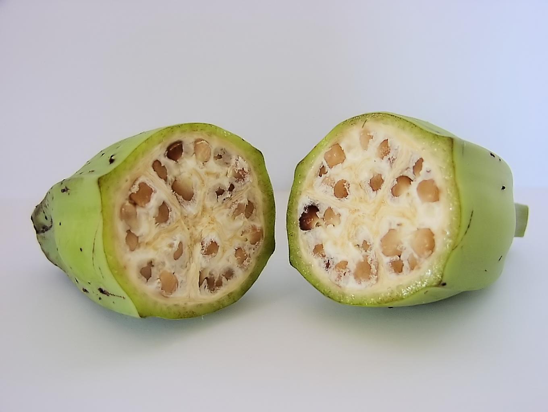 Plátano silvestre lleno de semillas