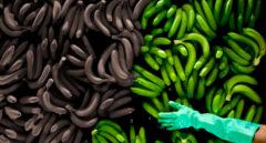 Apocalipsis banano: ¿arrasará el cambio climático los plátanos?