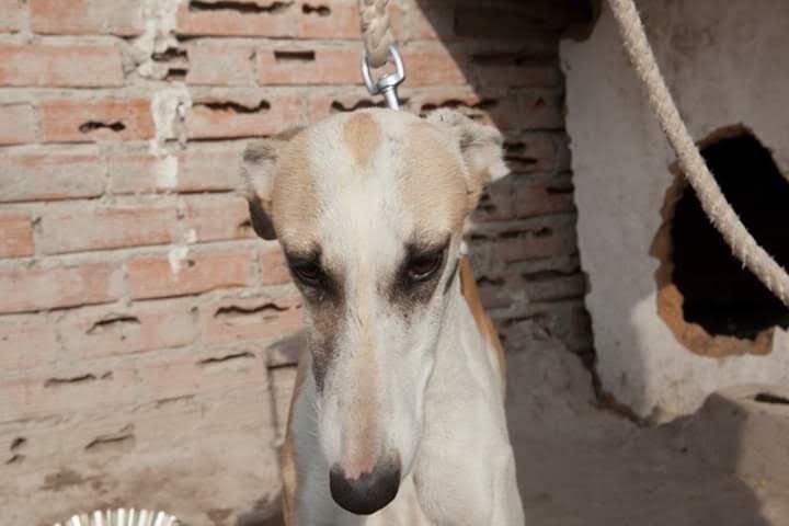 Perro en la Cañada Real (Madrid)