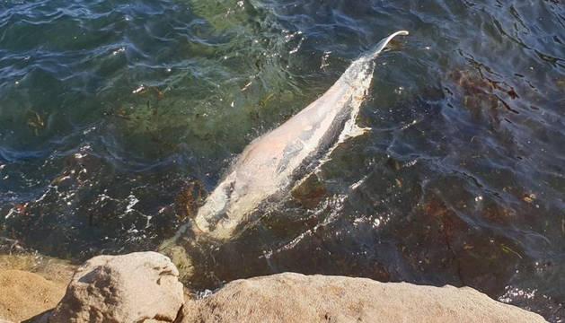 Cadáver de la ballena encontrada en Lugo