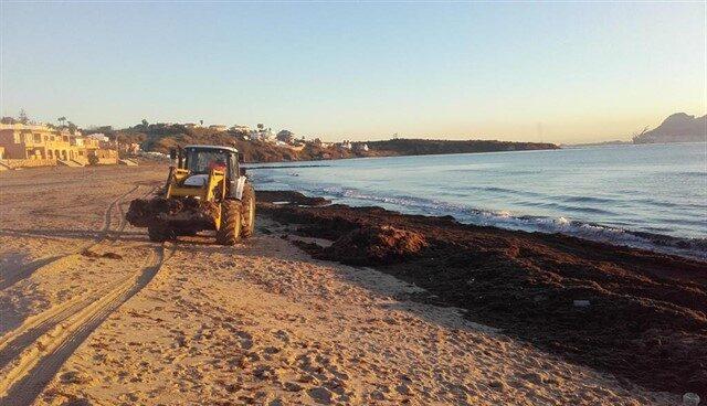 Algas en las playas de Andalucía
