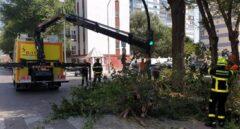 Árbol caído en Cádiz