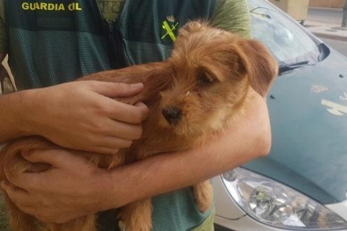 Perro rescatado en Navarra
