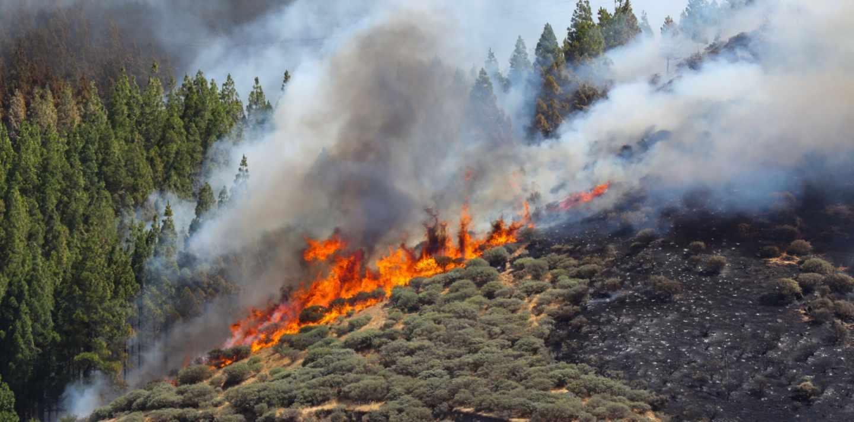 Vista del incendio declarado este sábado en la zona de Artenara en el oeste de la isla de Gran Canaria
