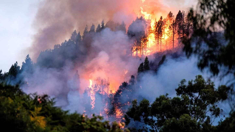 El fuego avanza en Gran Canaria: los incendios ya han arrasado casi mil hectáreas