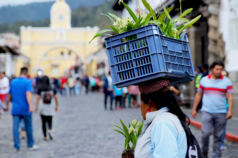 Una mujer lleva una cesta con plantas en la cabeza