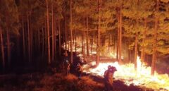 El incendio de Gran Canaria quedará estabilizado este miércoles tras arrasar más de 12.000 hectáreas